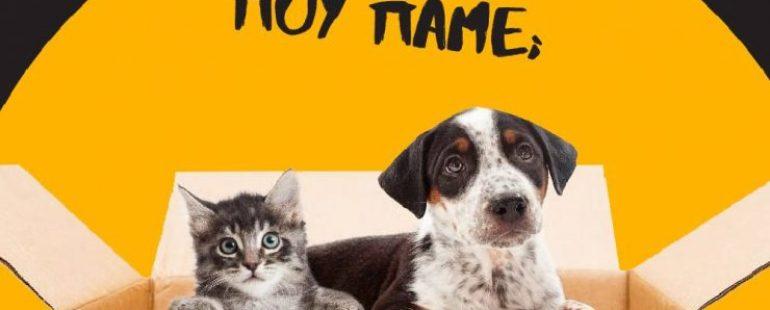 Μετακόμιση σπιτιού μαζί με τα κατοικίδια ζώα σας